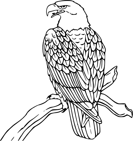 Bald Eagle clipart #12, Download drawings