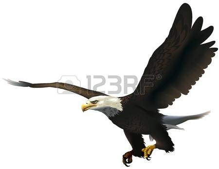 Bald Eagle clipart #11, Download drawings
