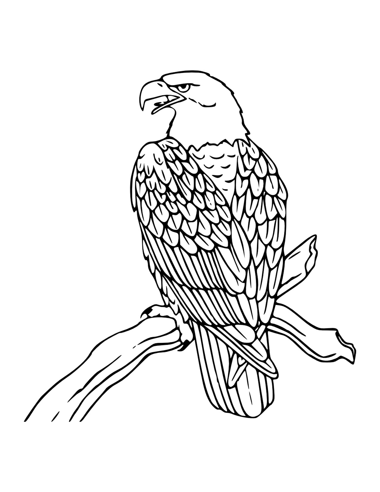 Bald Eagle coloring #7, Download drawings