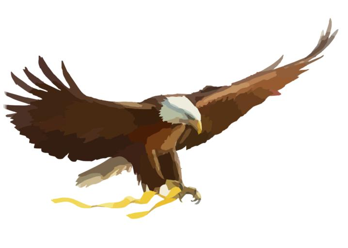 White-tailed Eagle svg #5, Download drawings
