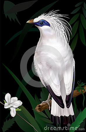 Bali Myna clipart #16, Download drawings