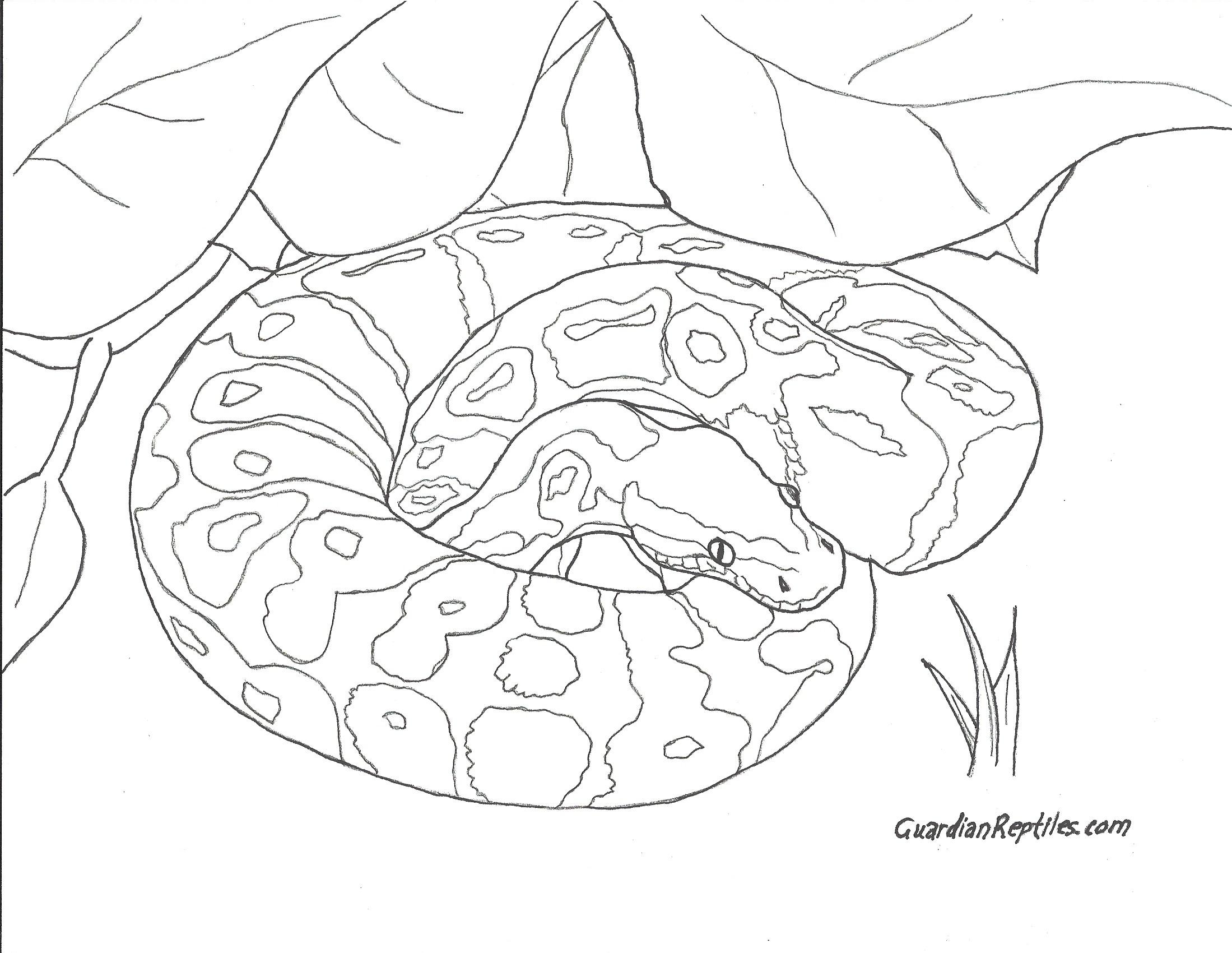 Ball Python coloring #2, Download drawings