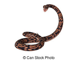 Ball Python clipart #10, Download drawings