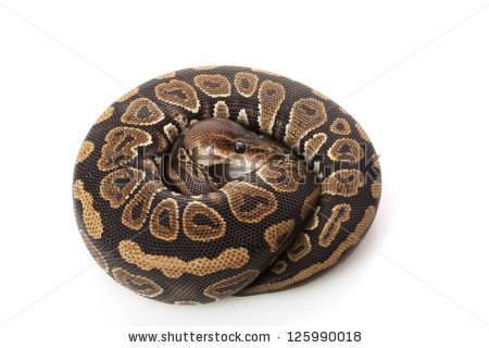 Ball Python clipart #4, Download drawings