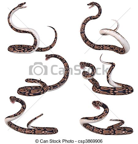 Ball Python clipart #11, Download drawings