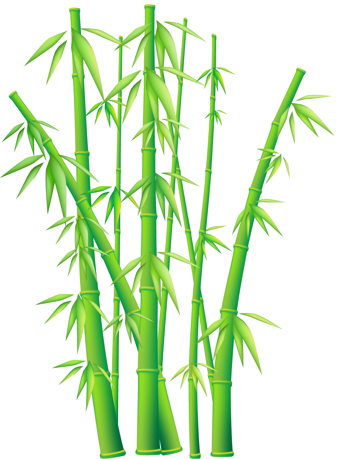 Bamboo clipart #9, Download drawings