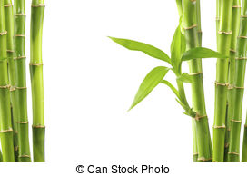Bamboo clipart #2, Download drawings