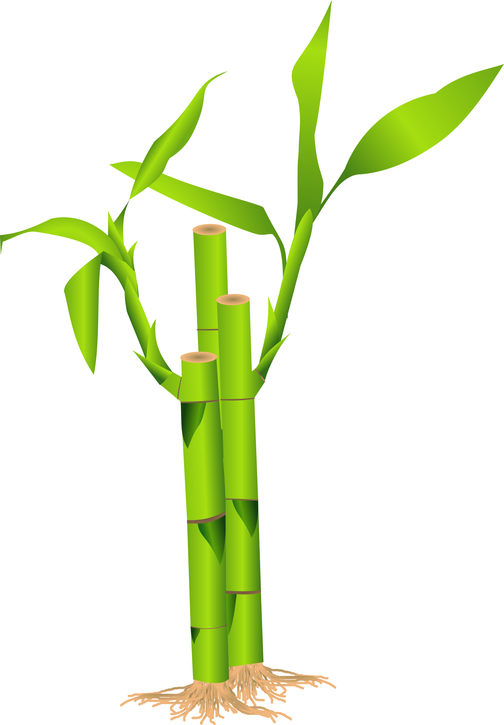 Bamboo clipart #8, Download drawings