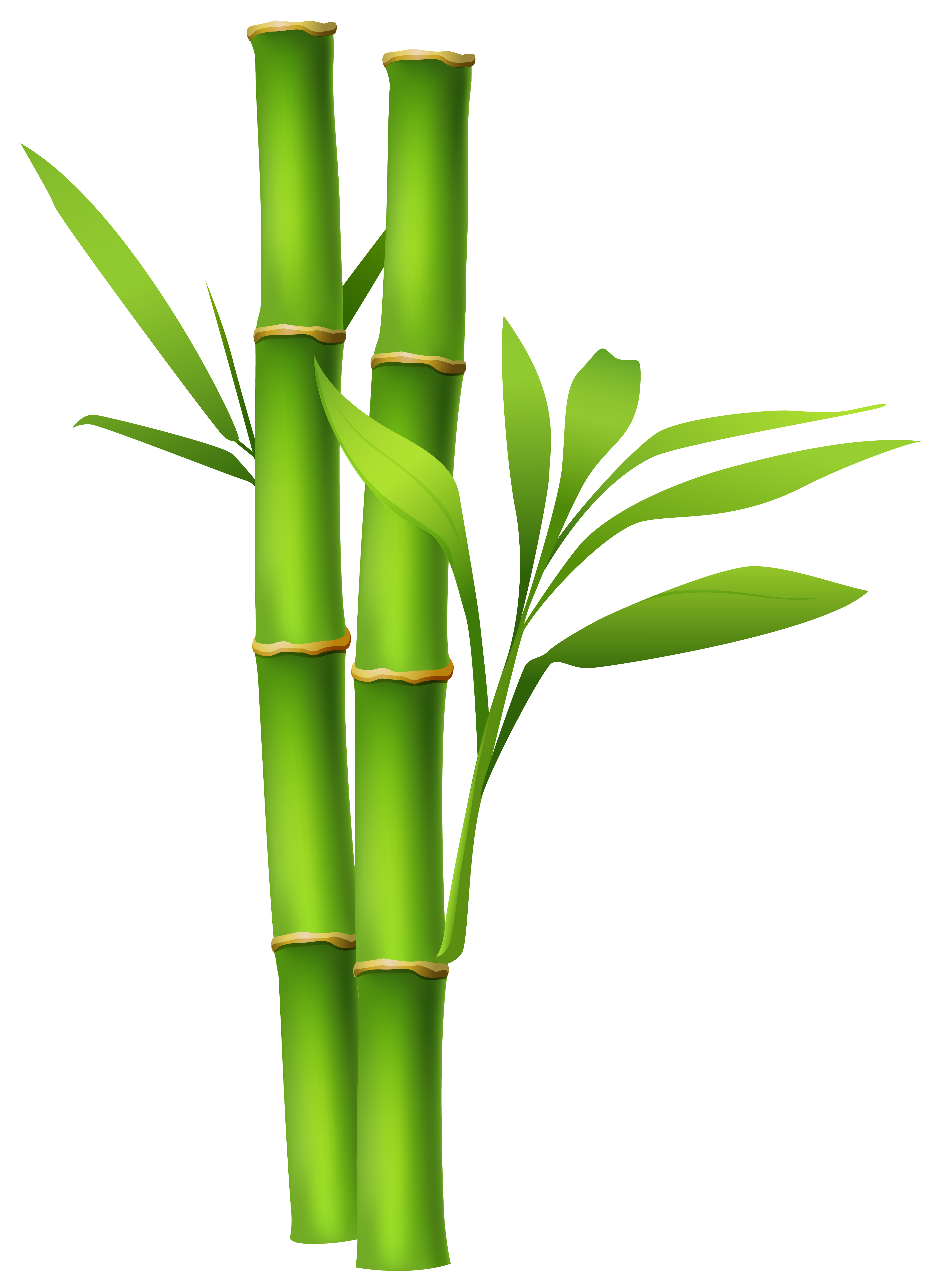 Bamboo clipart #5, Download drawings