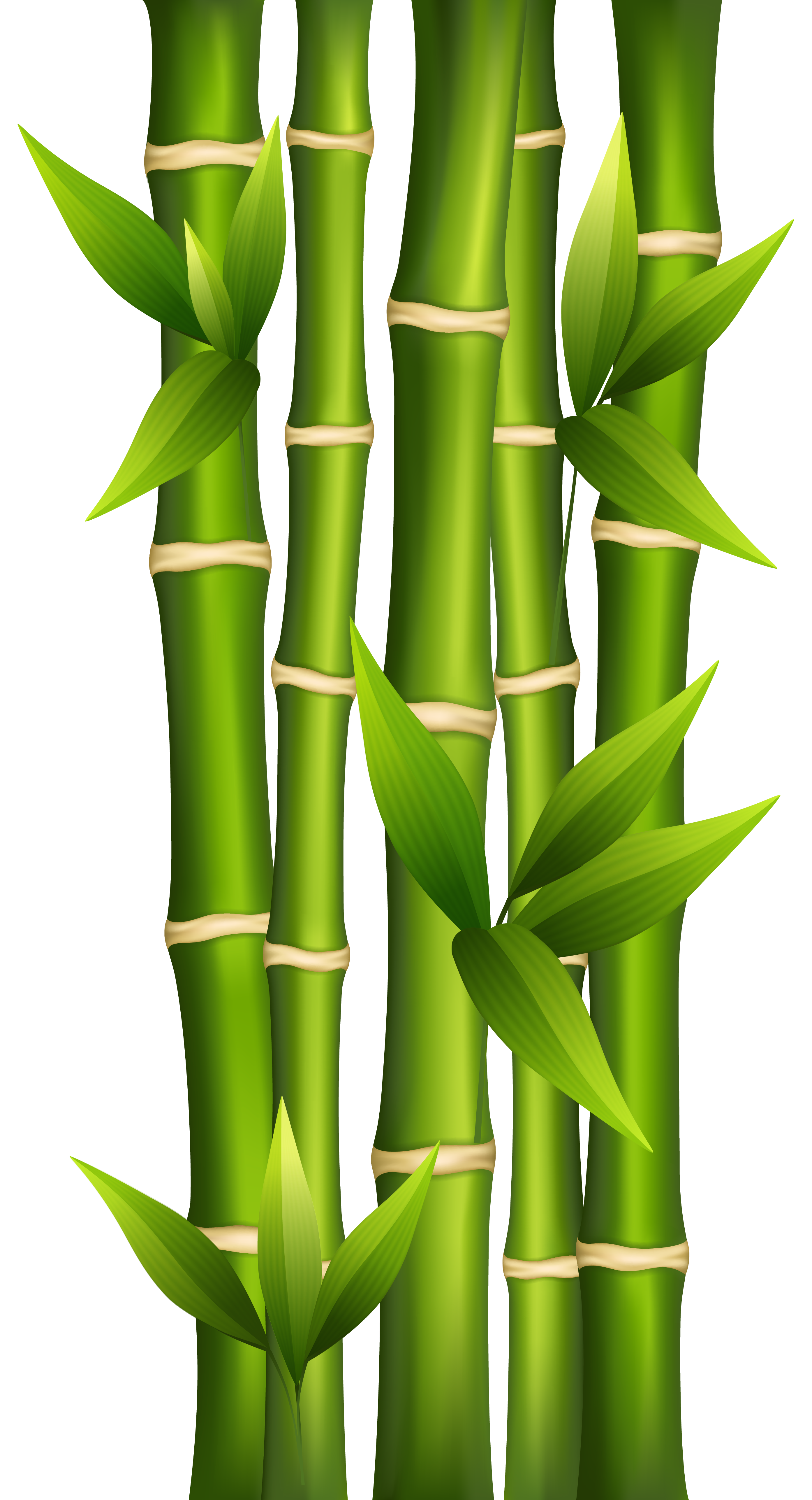 Bamboo clipart #6, Download drawings