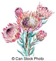 Banksia clipart #20, Download drawings