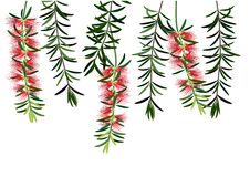 Banksia clipart #9, Download drawings