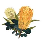 Banksia clipart #19, Download drawings