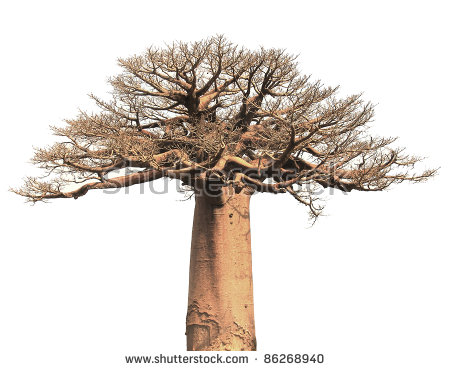 Baobab Tree clipart #11, Download drawings