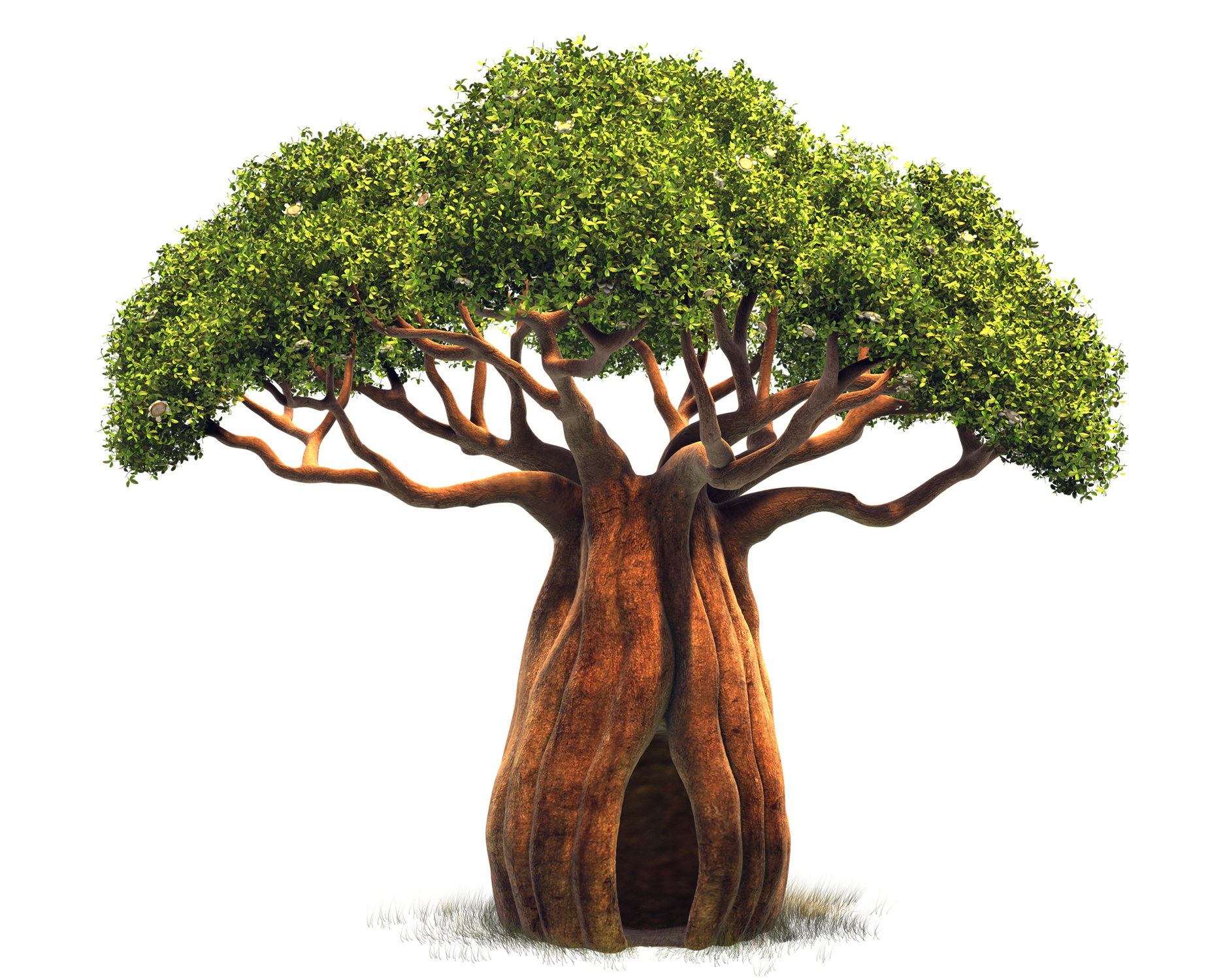 Baobab Tree clipart #1, Download drawings