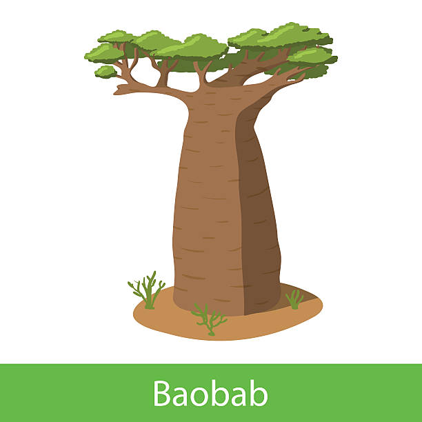 Baobab Tree clipart #2, Download drawings