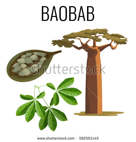 Baobab Tree clipart #5, Download drawings