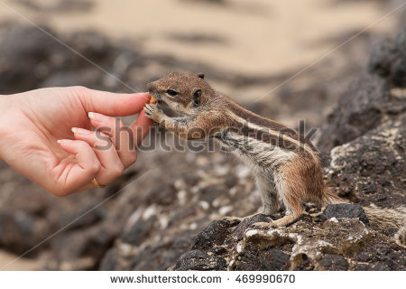 Barbary Ground Squirrel clipart #5, Download drawings