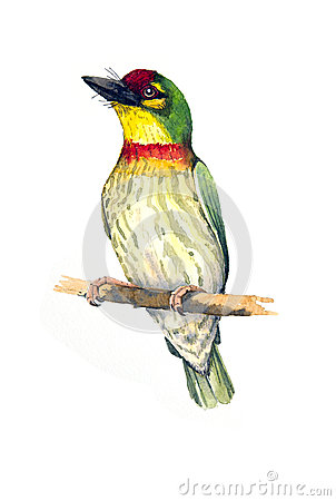Coppersmith Barbet coloring #20, Download drawings