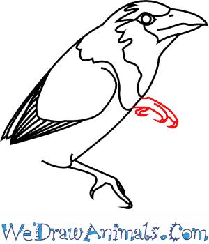 Barbet coloring #17, Download drawings