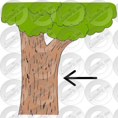 Bark clipart #9, Download drawings