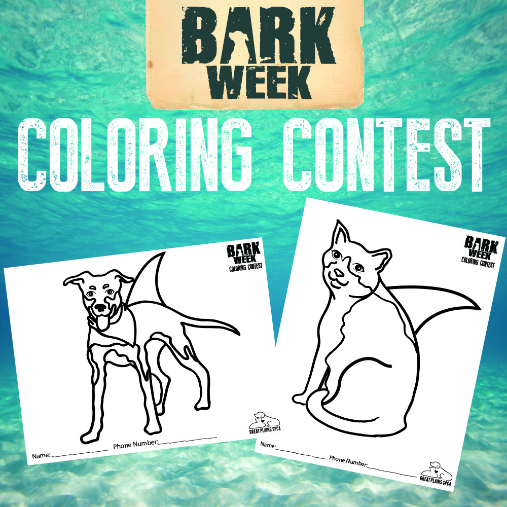 Bark coloring #2, Download drawings
