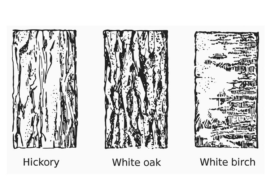Bark coloring #9, Download drawings