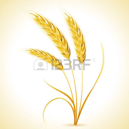 Barley clipart #6, Download drawings