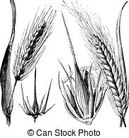 Barley clipart #5, Download drawings