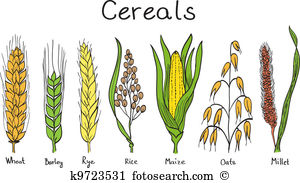 Barley clipart #20, Download drawings