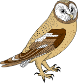 Barn Owl clipart #3, Download drawings