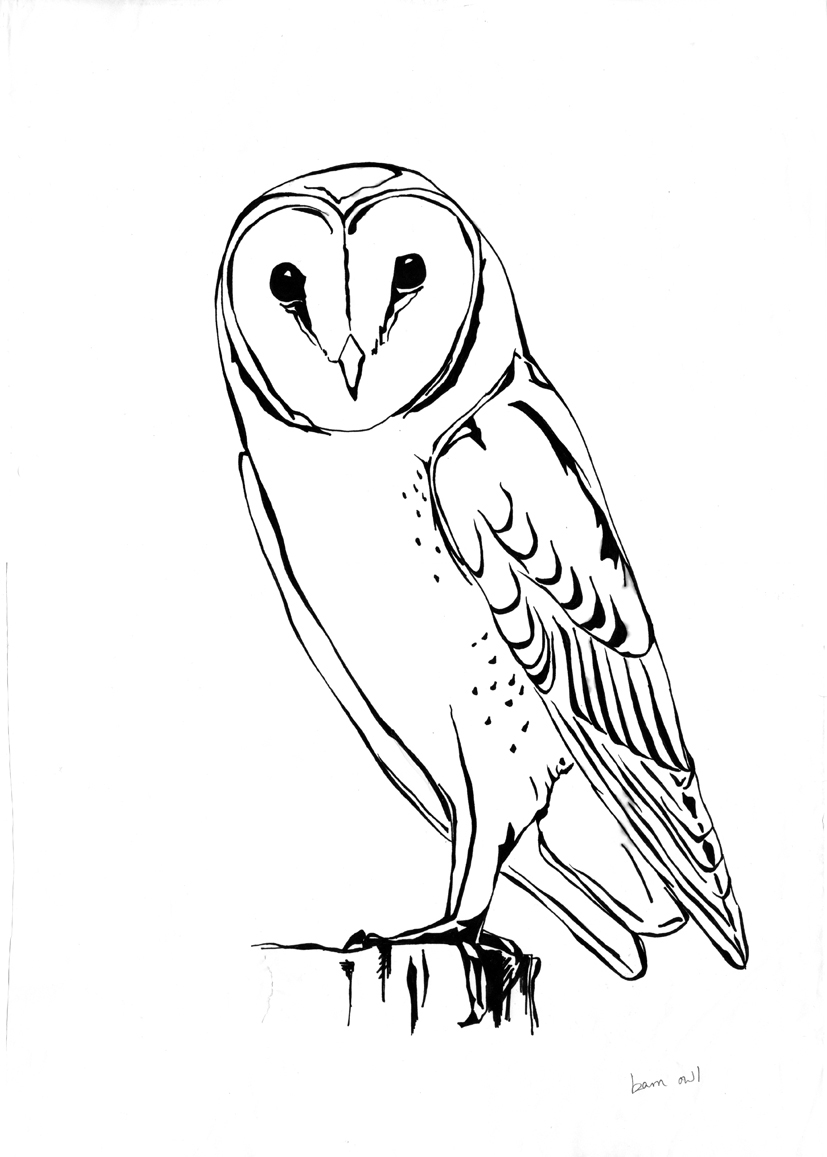Barn Owl clipart #2, Download drawings