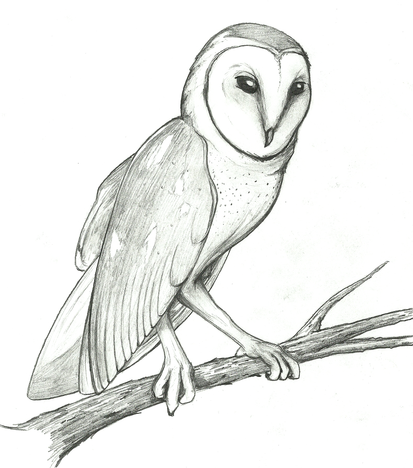 Barn Owl clipart #20, Download drawings