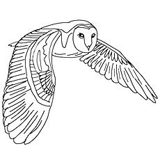 Barn Owl coloring #10, Download drawings