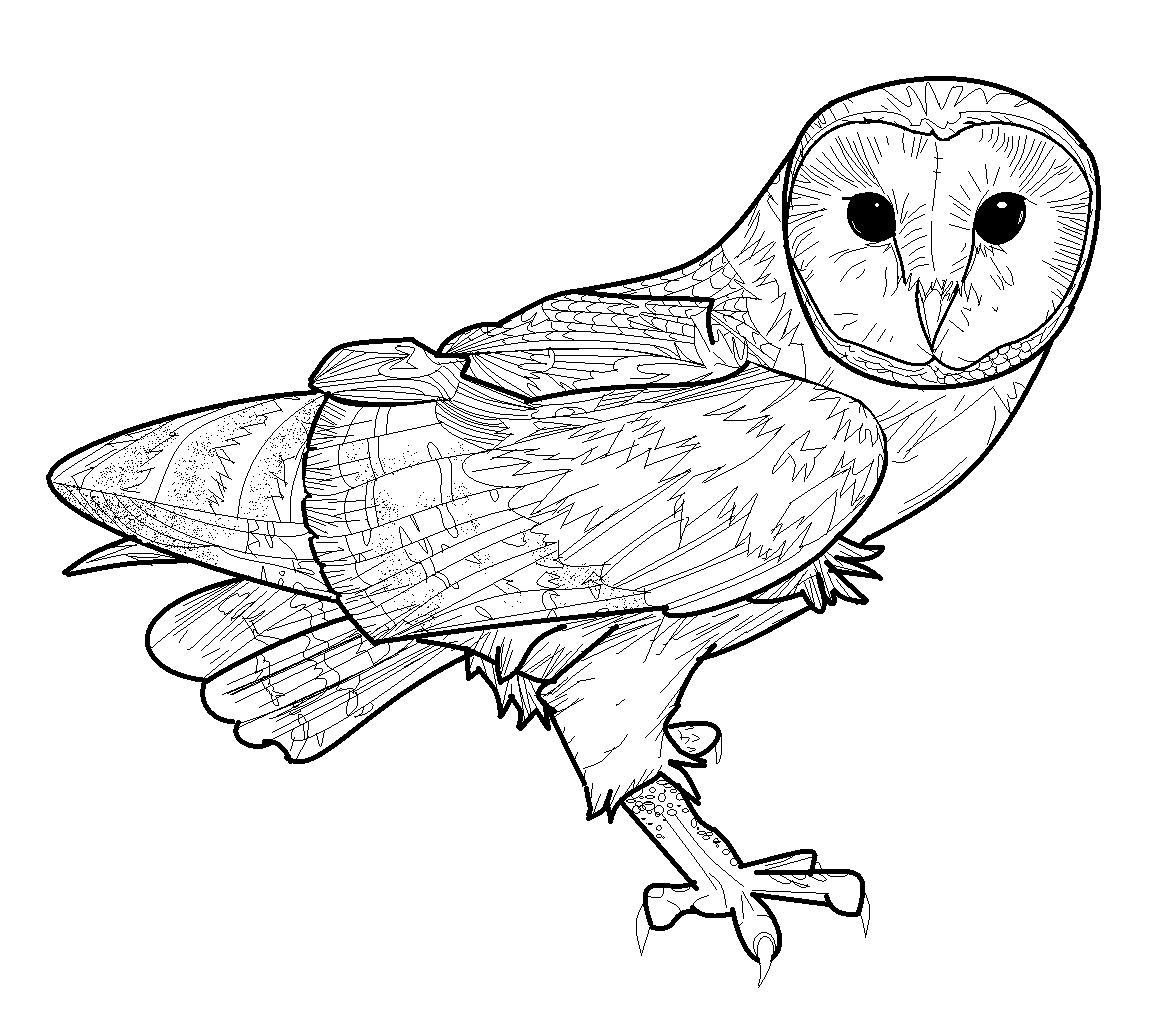 Barn Owl coloring #19, Download drawings