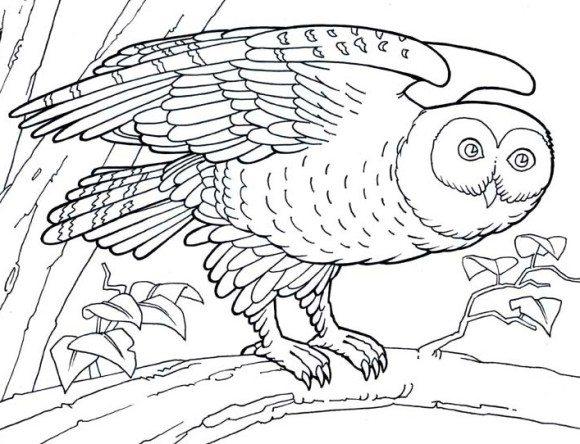 Barn Owl coloring #20, Download drawings