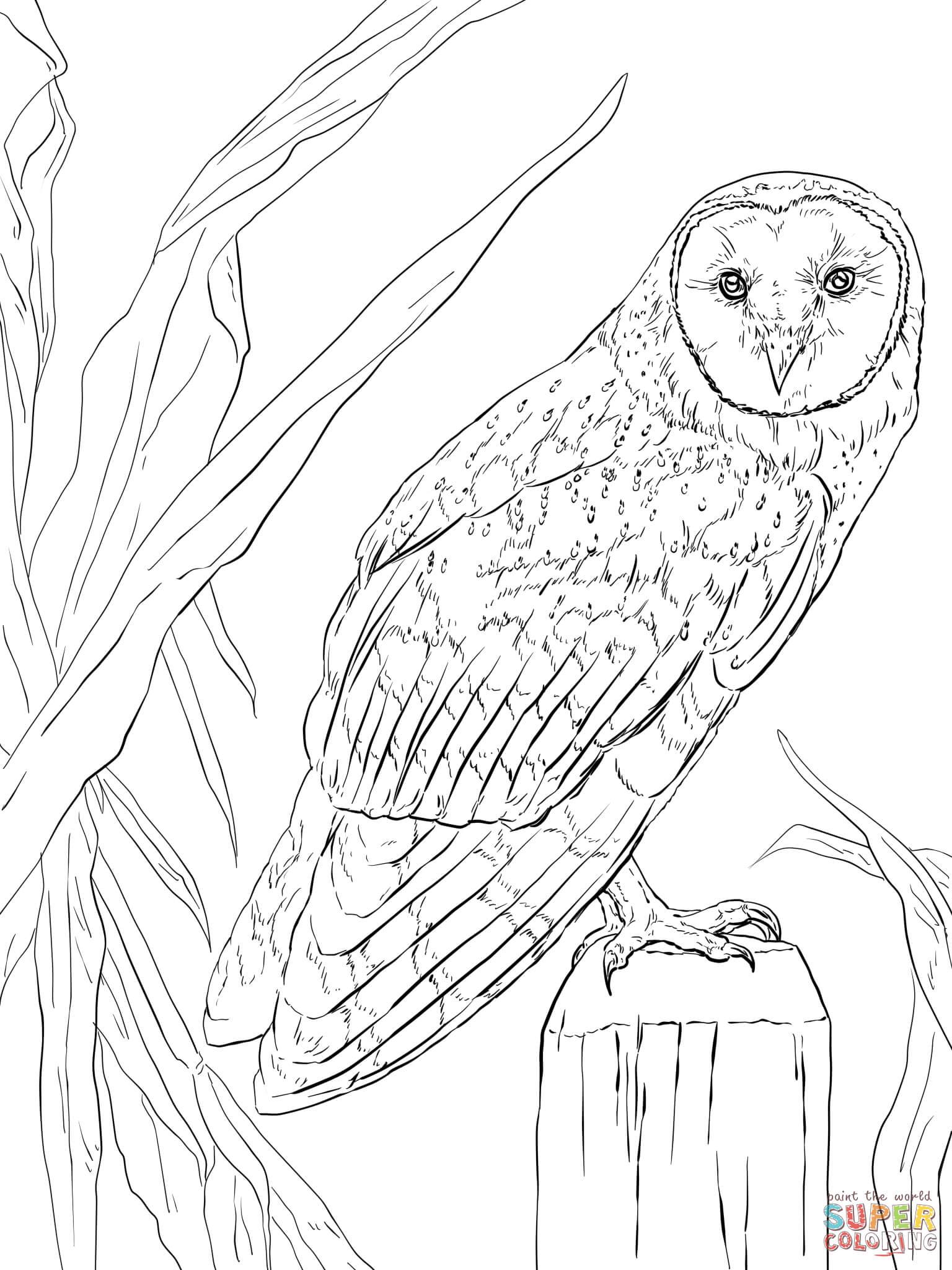 Short-eared Owl coloring #11, Download drawings