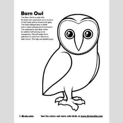 Barn Owl coloring #6, Download drawings