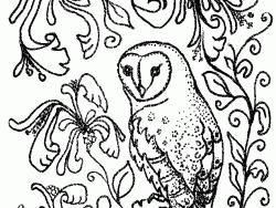 Barn Owl coloring #4, Download drawings
