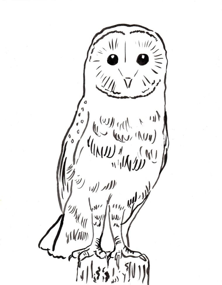 Barn Owl coloring #12, Download drawings