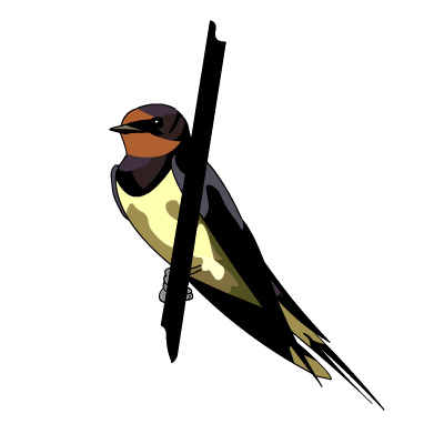 Barn Swallow svg #19, Download drawings