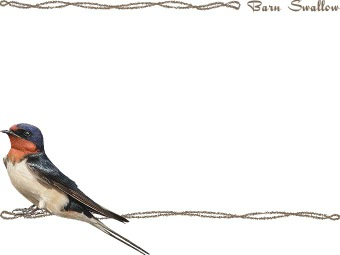 Barn Swallow clipart #11, Download drawings