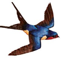 Barn Swallow clipart #14, Download drawings