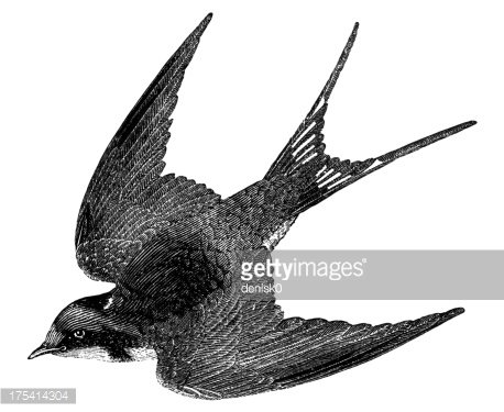 Barn Swallow clipart #1, Download drawings