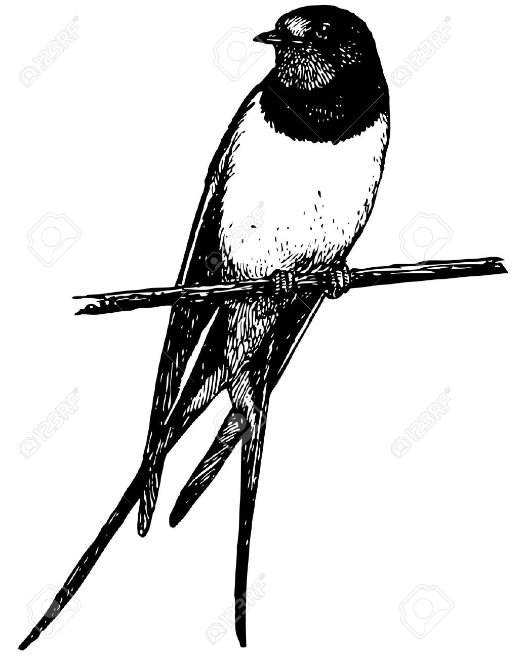 Barn Swallow clipart #16, Download drawings