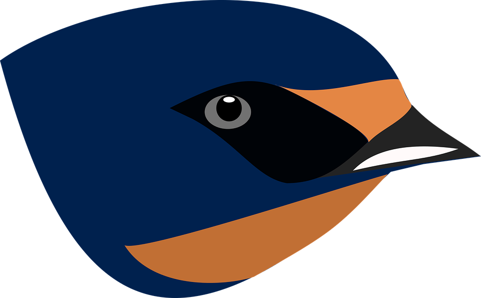 Barn Swallow svg #14, Download drawings