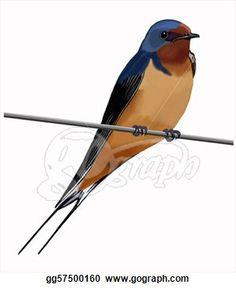 Barn Swallow svg #7, Download drawings