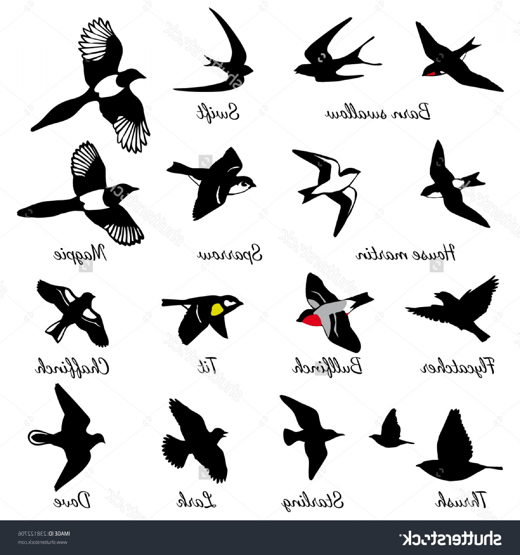 Barn Swallow svg #1, Download drawings