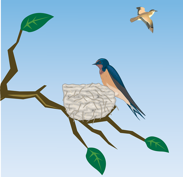 Barn Swallow svg #12, Download drawings