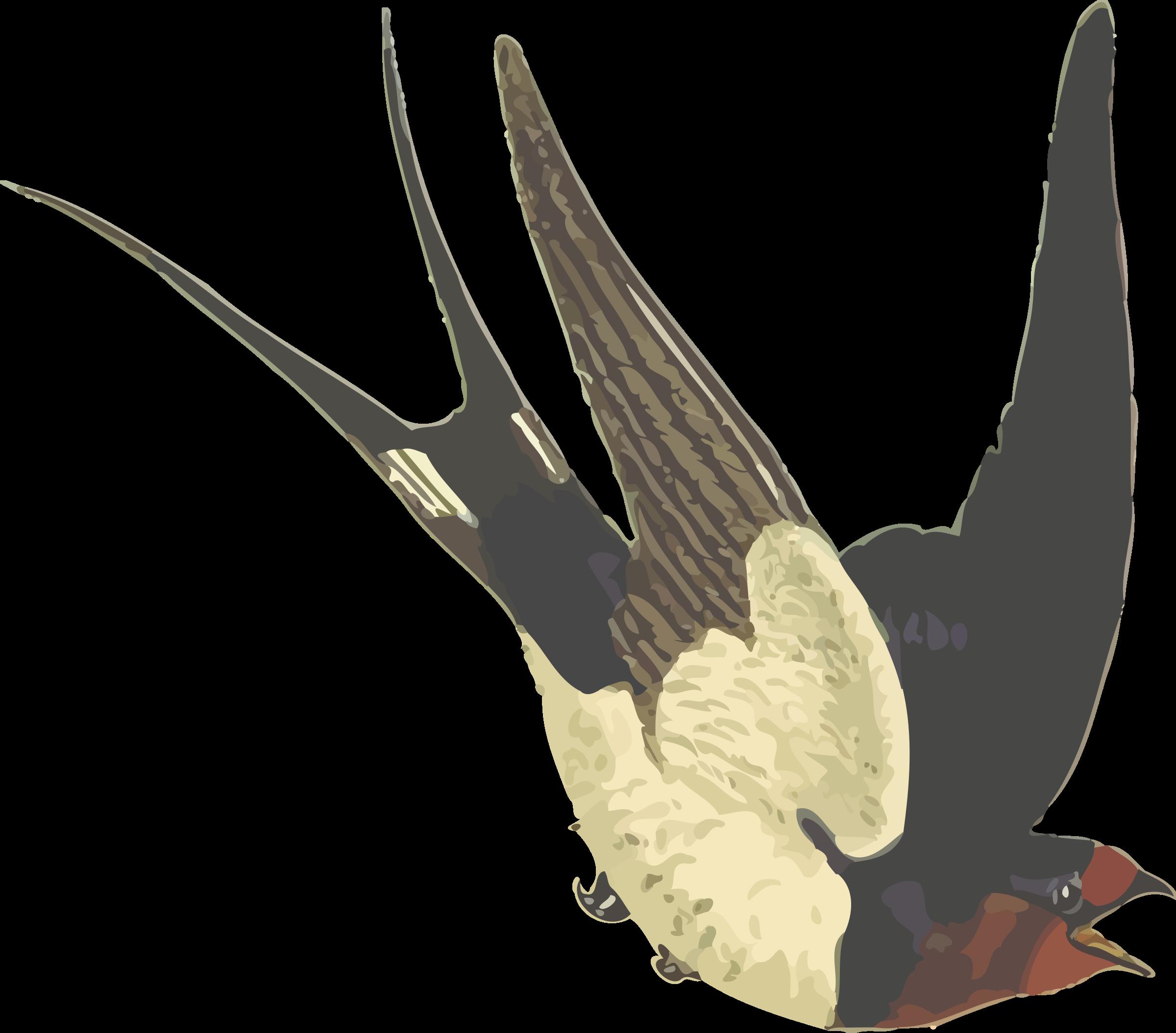 Barn Swallow svg #17, Download drawings